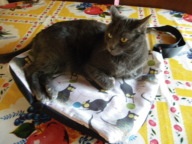 cat with new bag